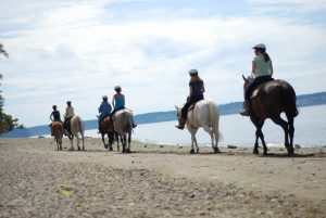 Campers on horseback beach ride