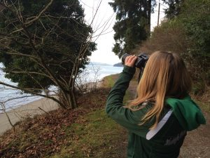 Winter bird watching activity for kids and families