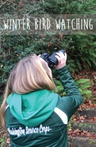 Winter Bird Watching with Kids in the Puget Sound! A fun activity to get kids outside in the winter!