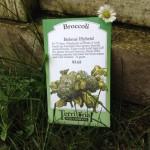 Planting broccoli in your spring garden