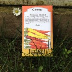 Planting carrots in a spring garden