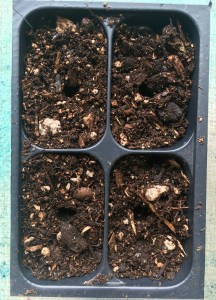 4 Small indentations to plant the seeds
