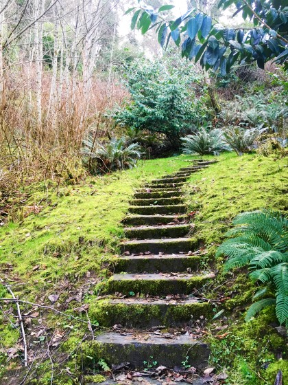 Mossy Trail at Camp Sealth