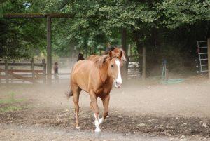 Camp Sealth Horse