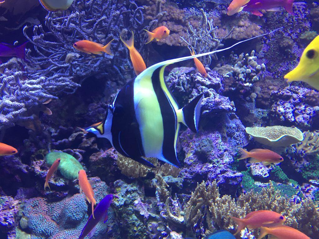 Fish at Seattle Aquarium